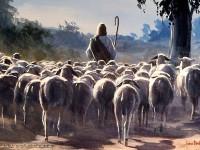 O cuidado com as ovelhas