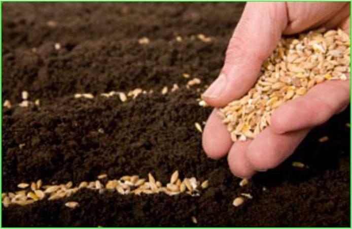 Resultado de imagem para O terreno onde a semente foi plantada biblia