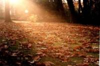 A renovação do entendimento: valores espirituais contra valores humanos