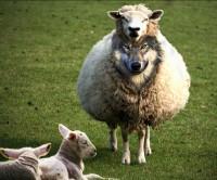 "Pragmatismo Religioso e Carisma Sem Caráter, Marcas de ""Lobos Disfarçados""!"