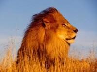O Leão de Tamar