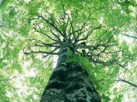 Que Tipo de Árvore é Você ?